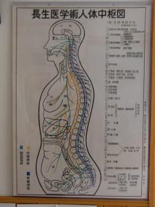 人体中枢図