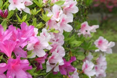 5月11日(木)は都合により、お休みさせていただきます。