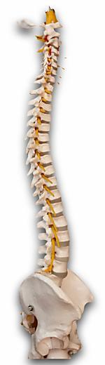 脊柱安定化.003