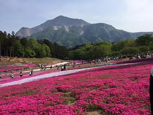 秩父羊山公園 芝桜の丘に行ってまいりました。