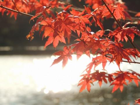 11月9日(金)・10日(土)は医学会のため、 お休みさせていただきます。