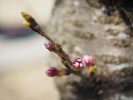 3月21日 春分の日は営業いたします!