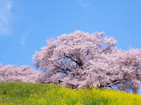 4月5日(金)6日(土)は医学会のため、 お休みさせていただきます。